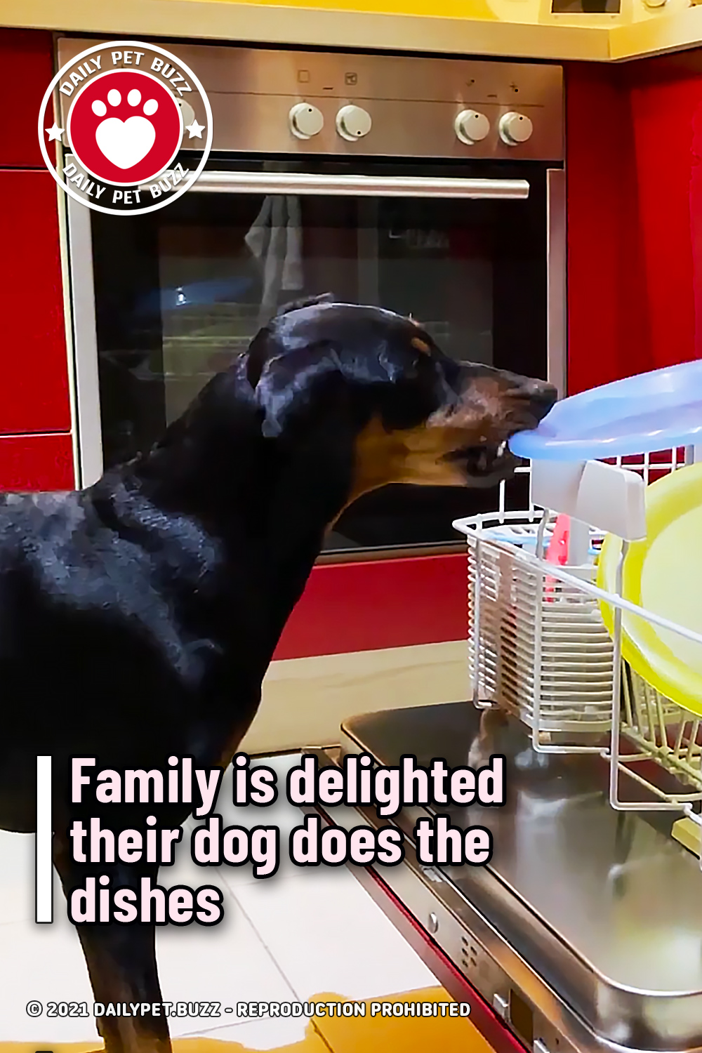 Family is delighted their dog does the dishes