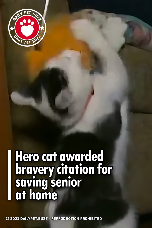 Hero cat awarded bravery citation for saving senior at home
