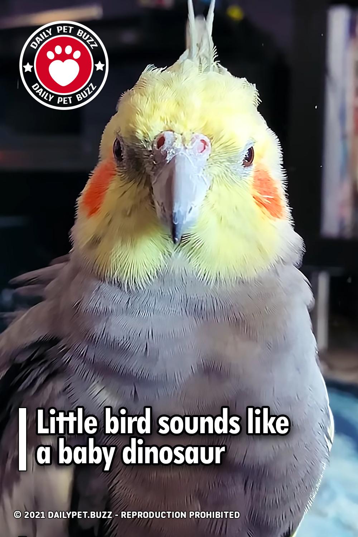 Little bird sounds like a baby dinosaur