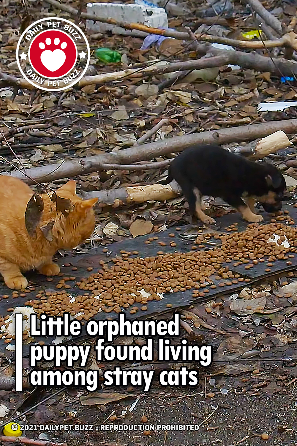 Little orphaned puppy found living among stray cats