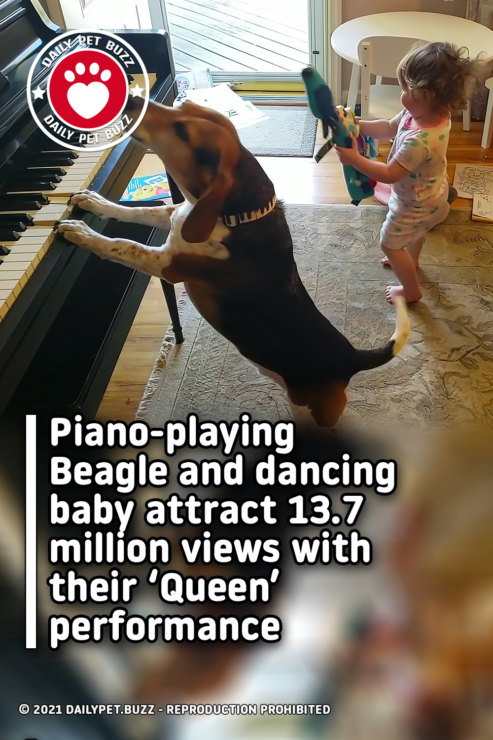 Piano-playing Beagle and dancing baby attract 13.7 million views with their 'Queen' performance
