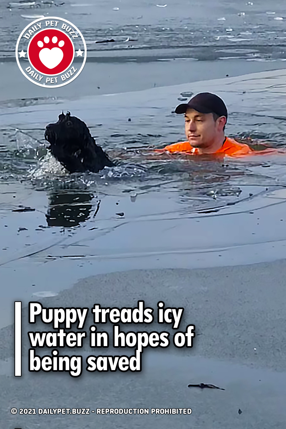Puppy treads icy water in hopes of being saved