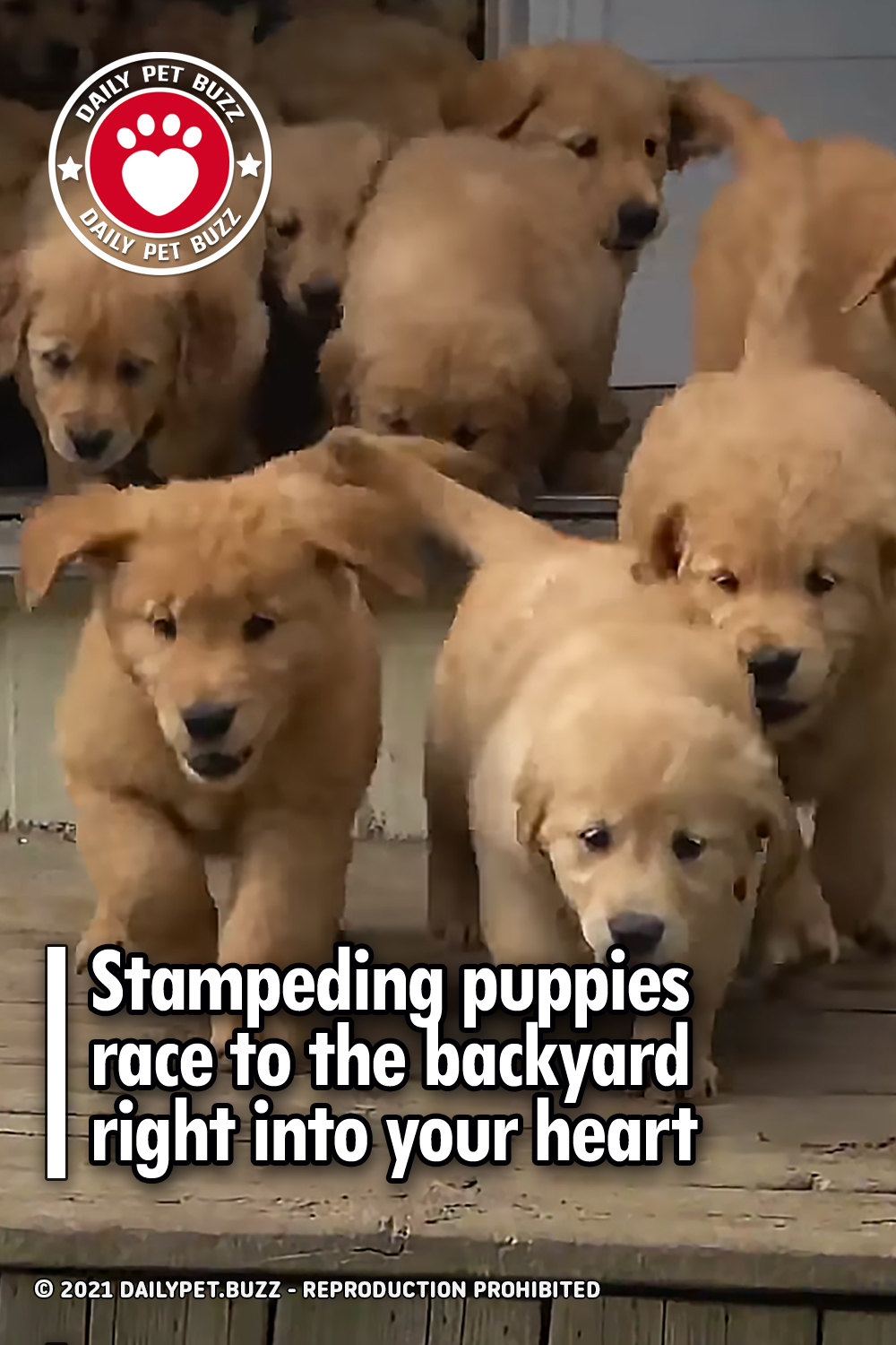 Stampeding puppies race to the backyard right into your heart