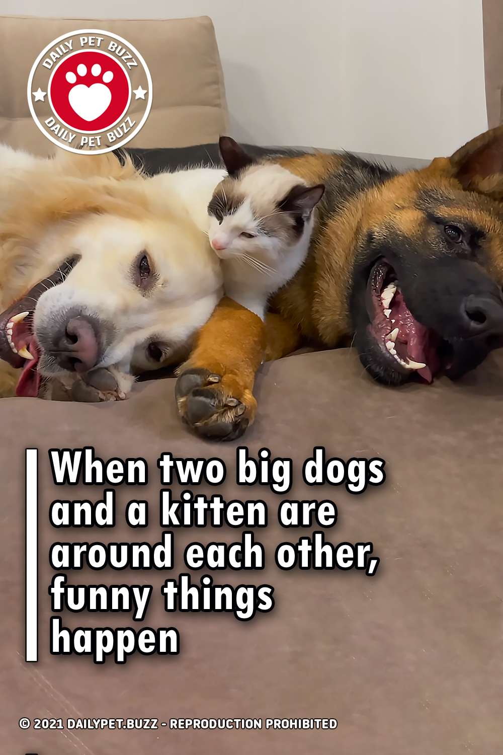 When two big dogs and a kitten are around each other, funny things happen