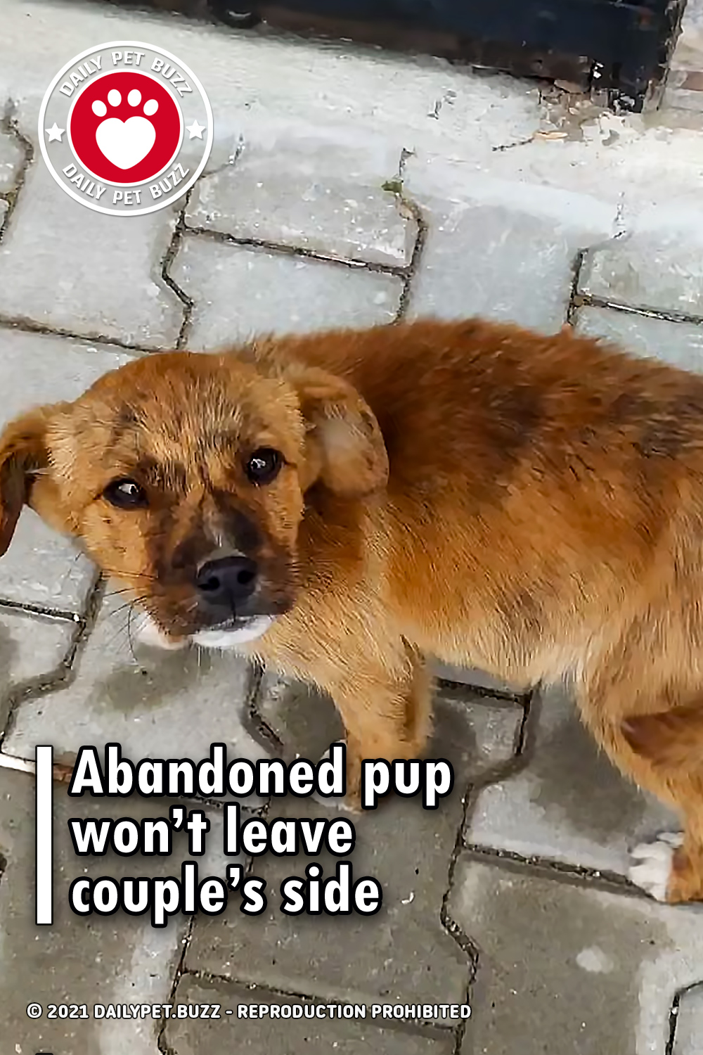 Abandoned pup won't leave couple's side
