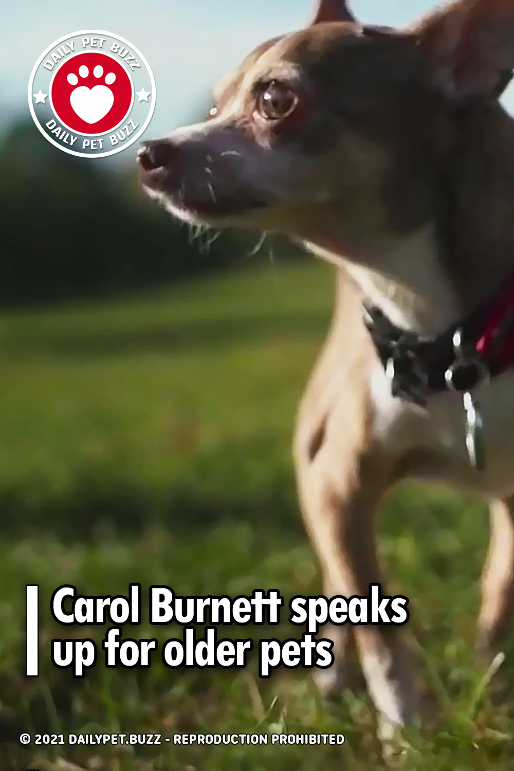 Carol Burnett speaks up for older pets