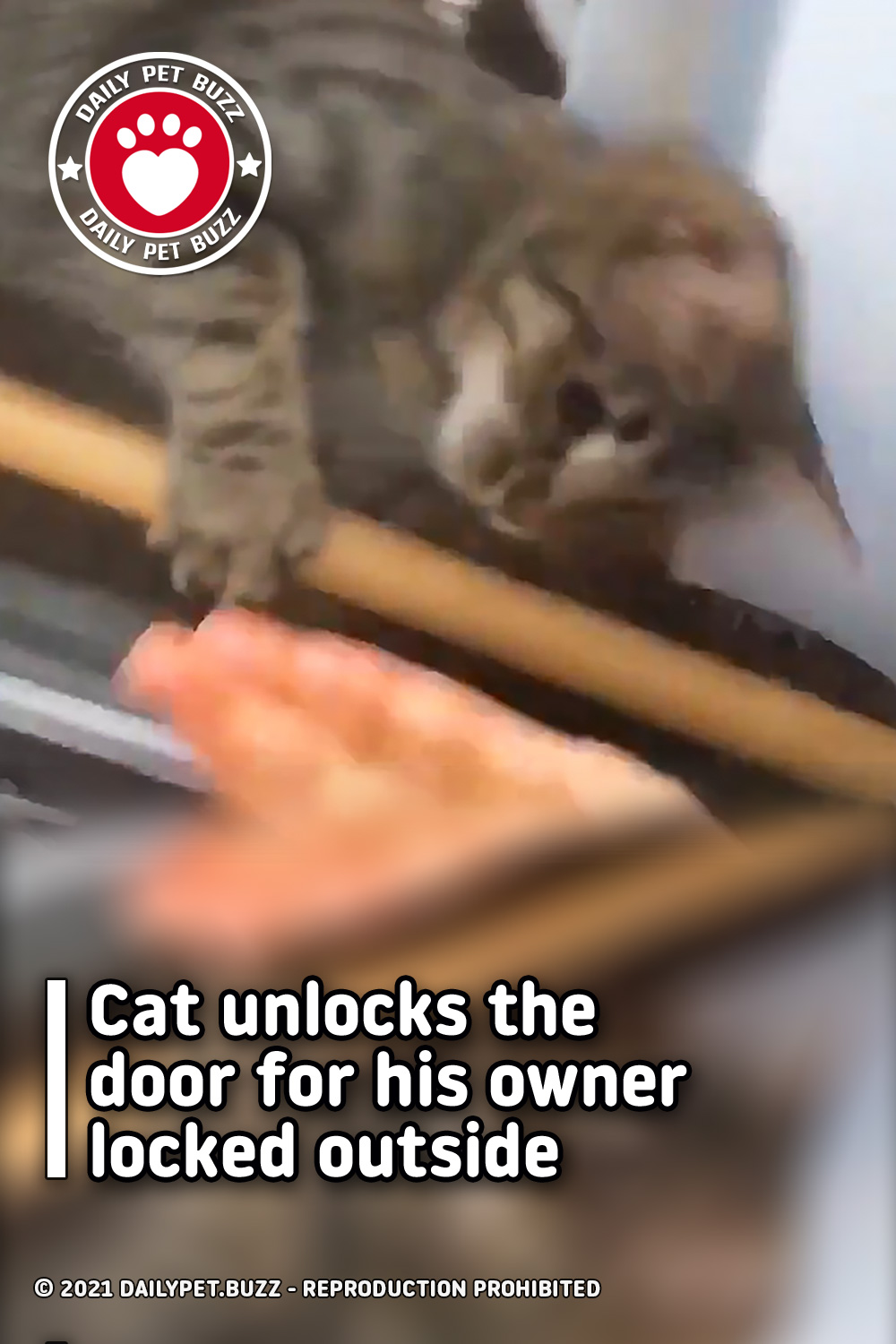 Cat unlocks the door for his owner locked outside
