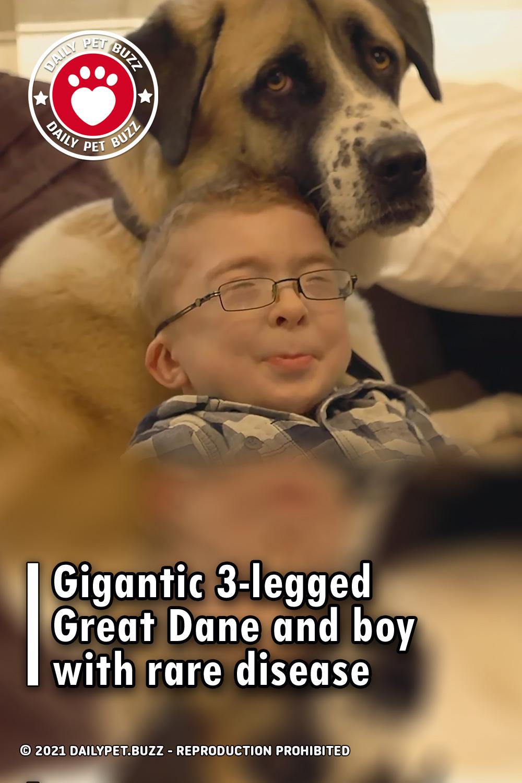 Gigantic 3-legged Great Dane and boy with rare disease