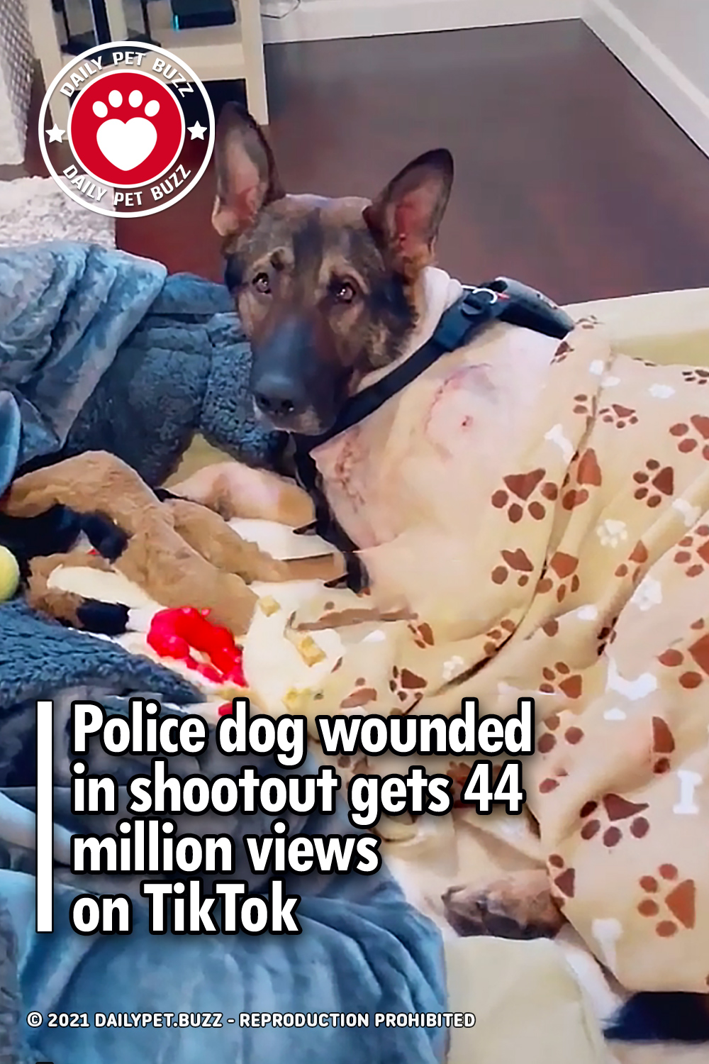 Police dog wounded in shootout gets 44 million views on TikTok