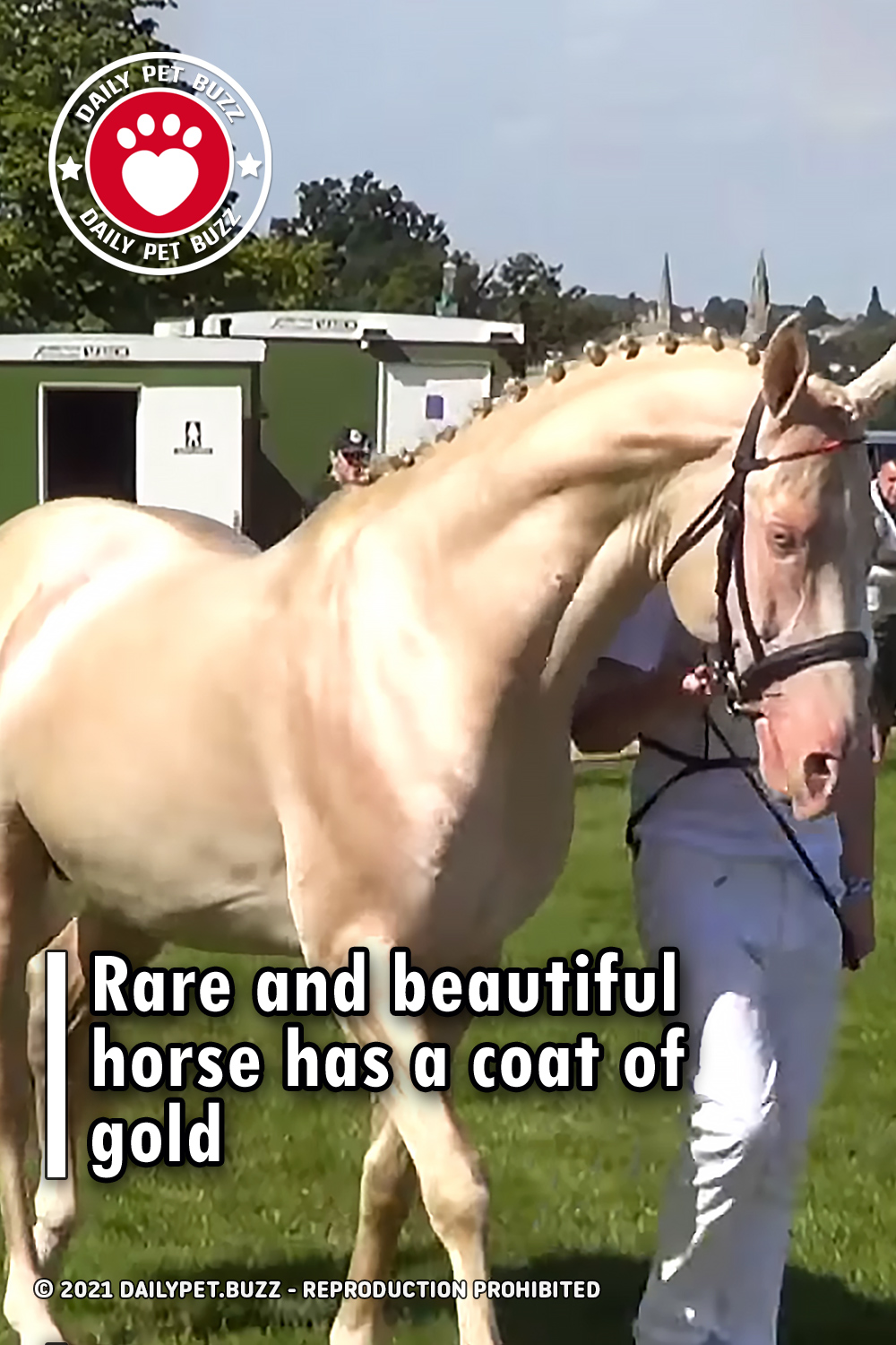 Rare and beautiful horse has a coat of gold