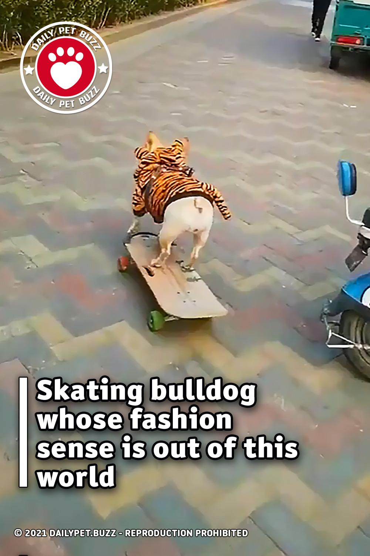 Skating bulldog whose fashion sense is out of this world