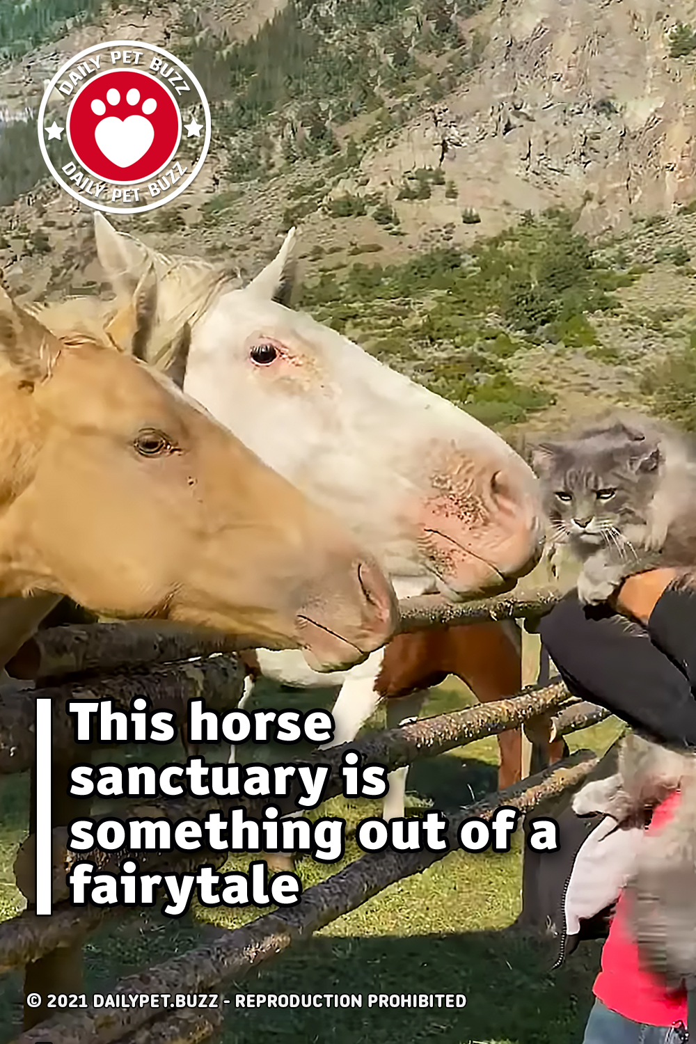 This horse sanctuary is something out of a fairytale