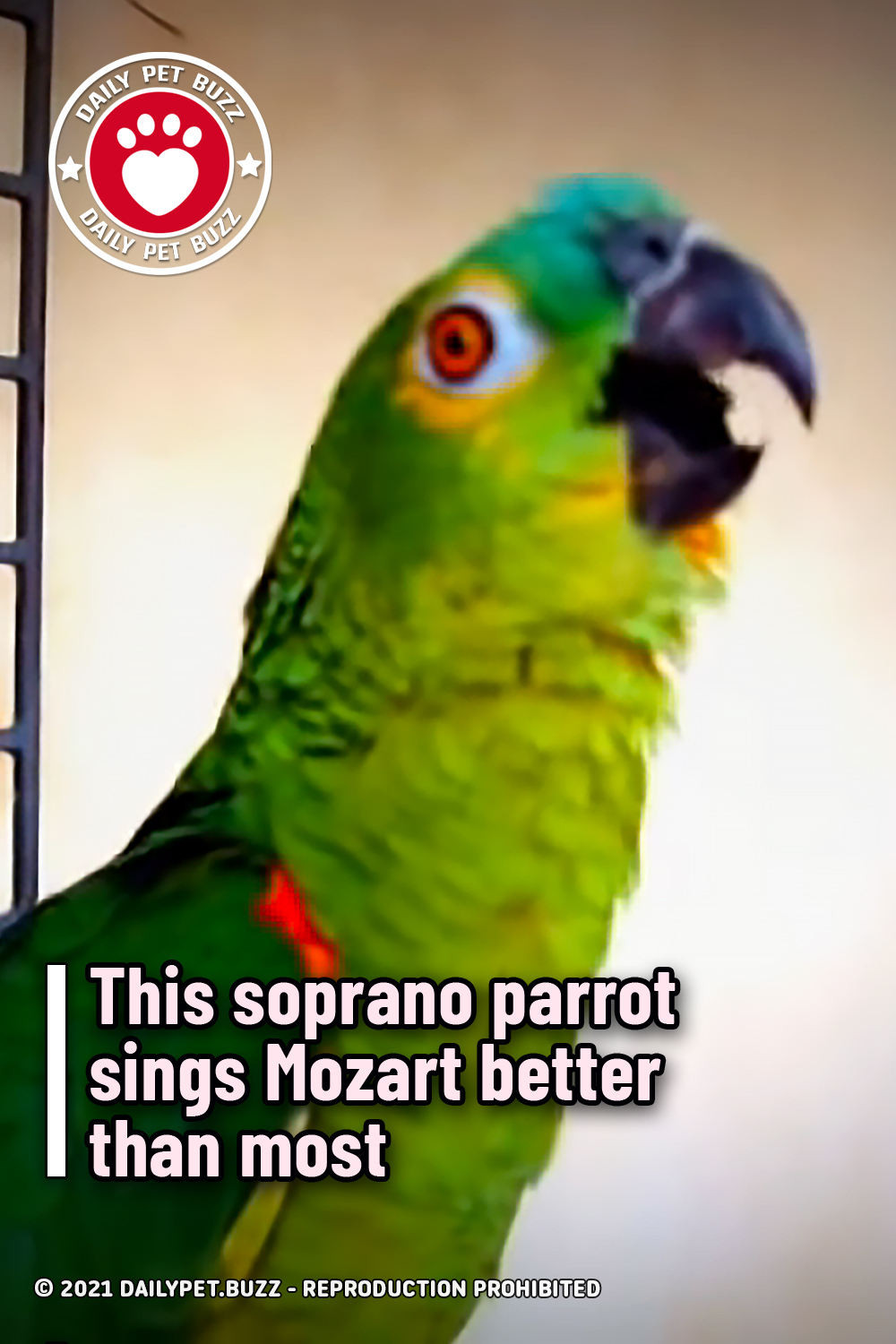 This soprano parrot sings Mozart better than most