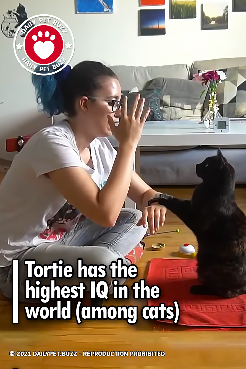 Tortie has the highest IQ in the world (among cats)