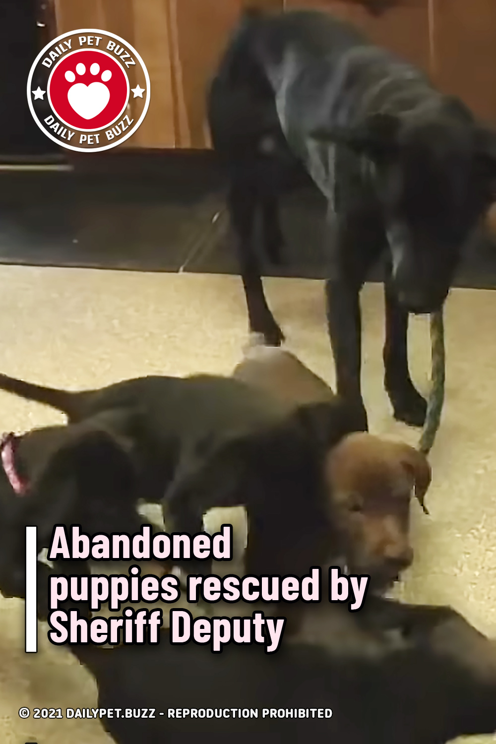 Abandoned puppies rescued by Sheriff Deputy