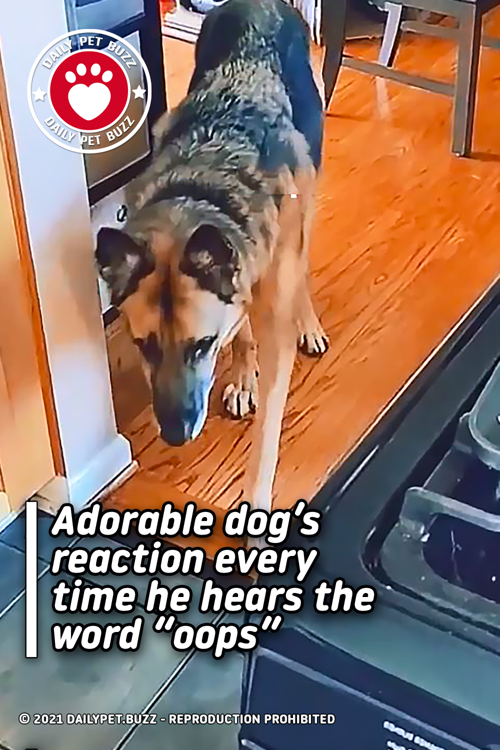 """Adorable dog's reaction every time he hears the word """"oops"""""""