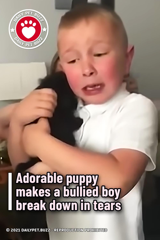 Adorable puppy makes a bullied boy break down in tears