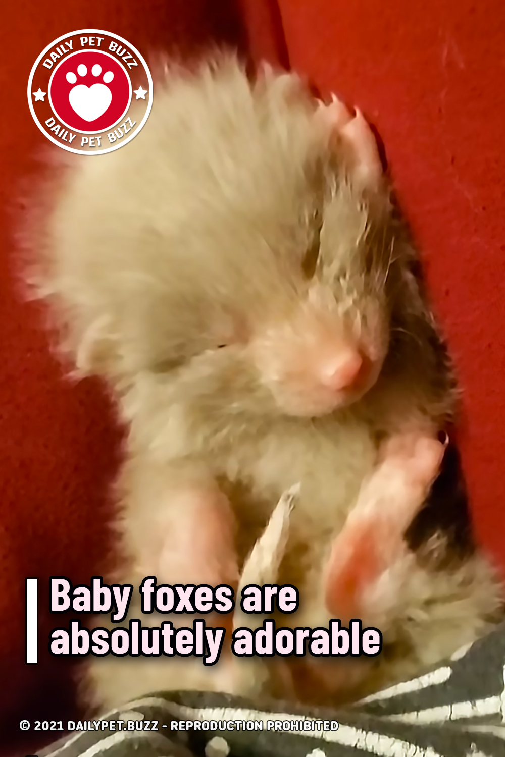 Baby foxes are absolutely adorable