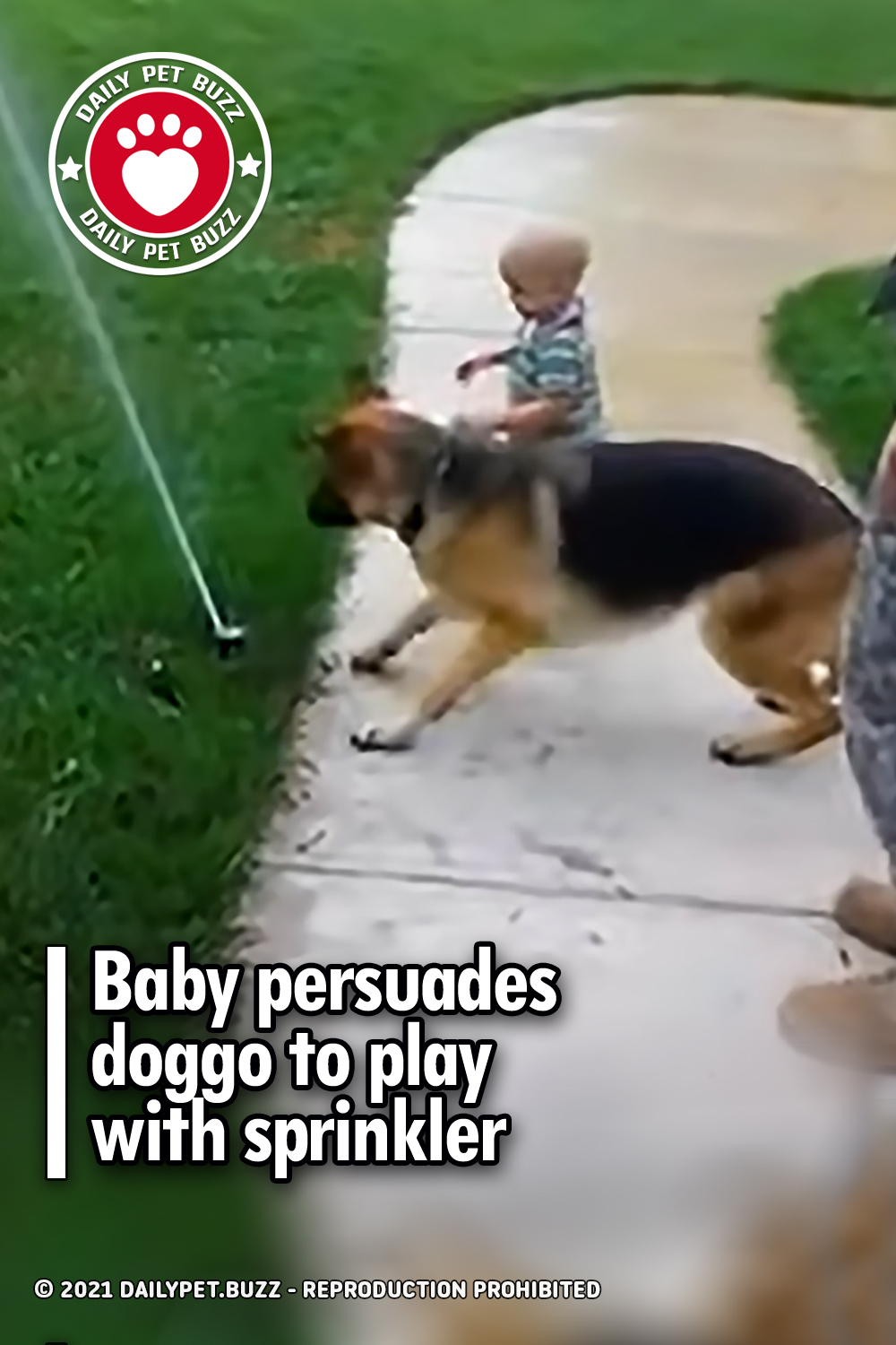 Baby persuades doggo to play with sprinkler
