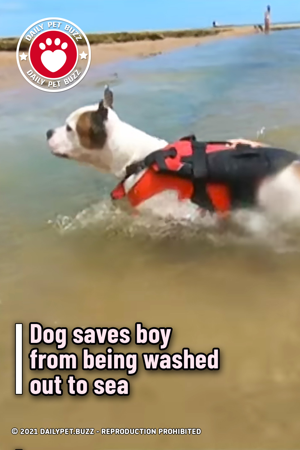 Dog saves boy from being washed out to sea