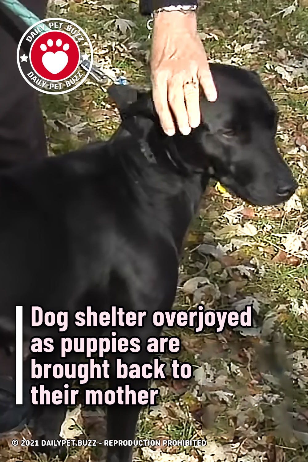 Dog shelter overjoyed as puppies are brought back to their mother