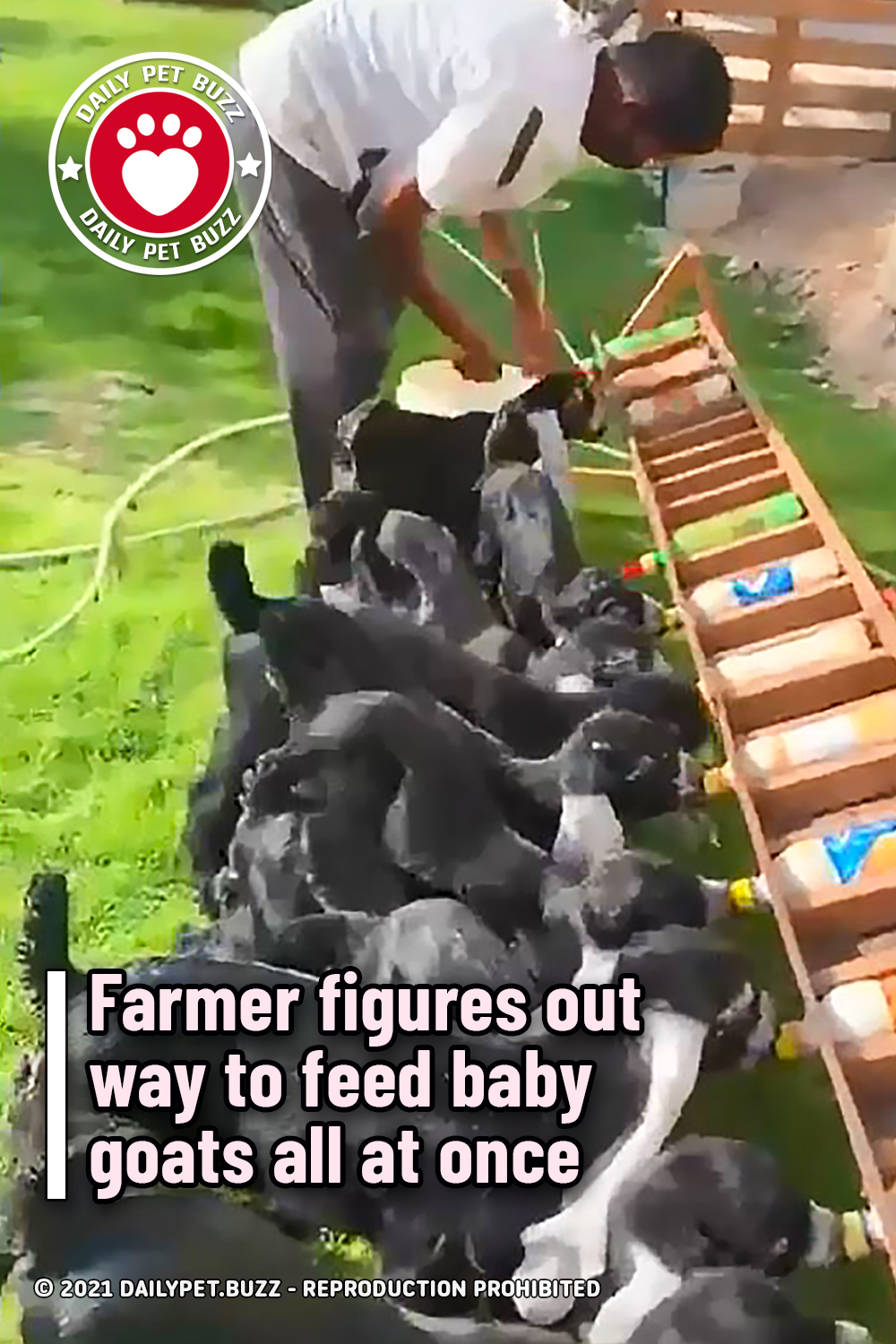 Farmer figures out way to feed baby goats all at once