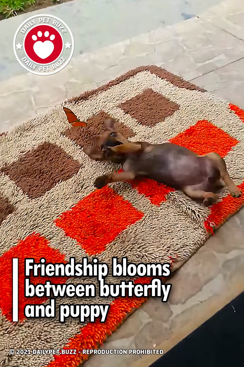 Friendship blooms between butterfly and puppy