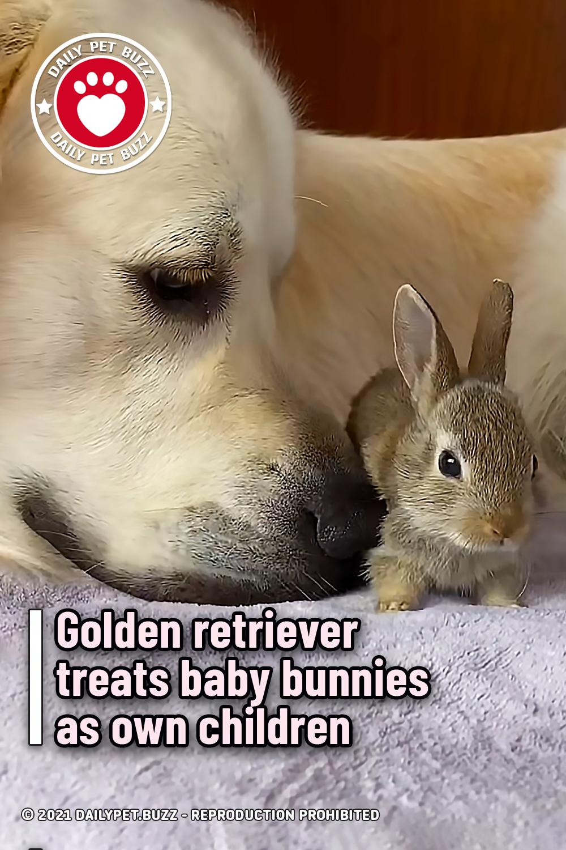 Golden retriever treats baby bunnies as own children