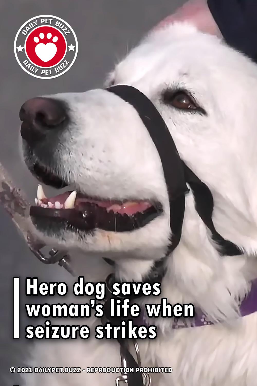 Hero dog saves woman's life when seizure strikes