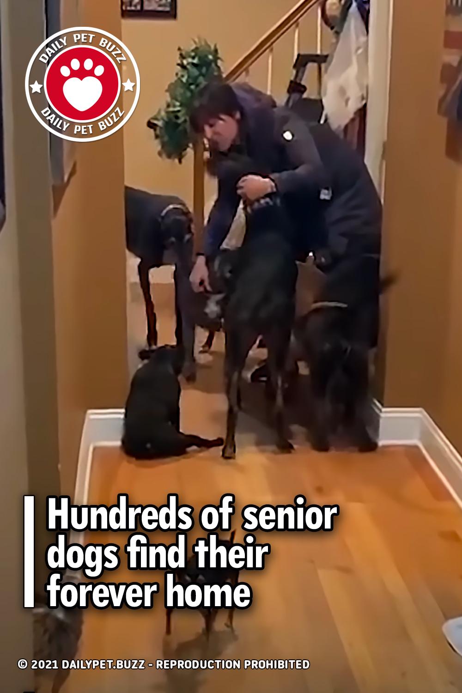 Hundreds of senior dogs find their forever home