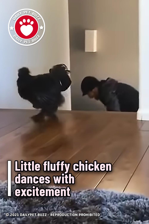 Little fluffy chicken dances with excitement