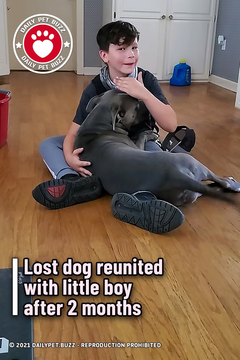 Lost dog reunited with little boy after 2 months