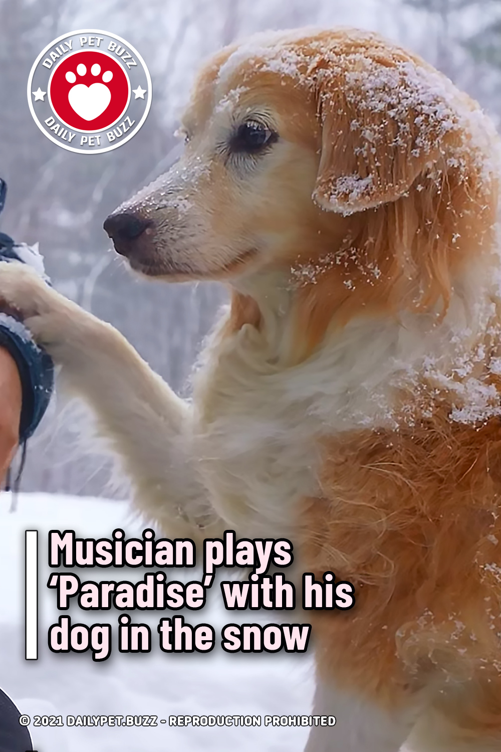 Musician plays 'Paradise' with his dog in the snow