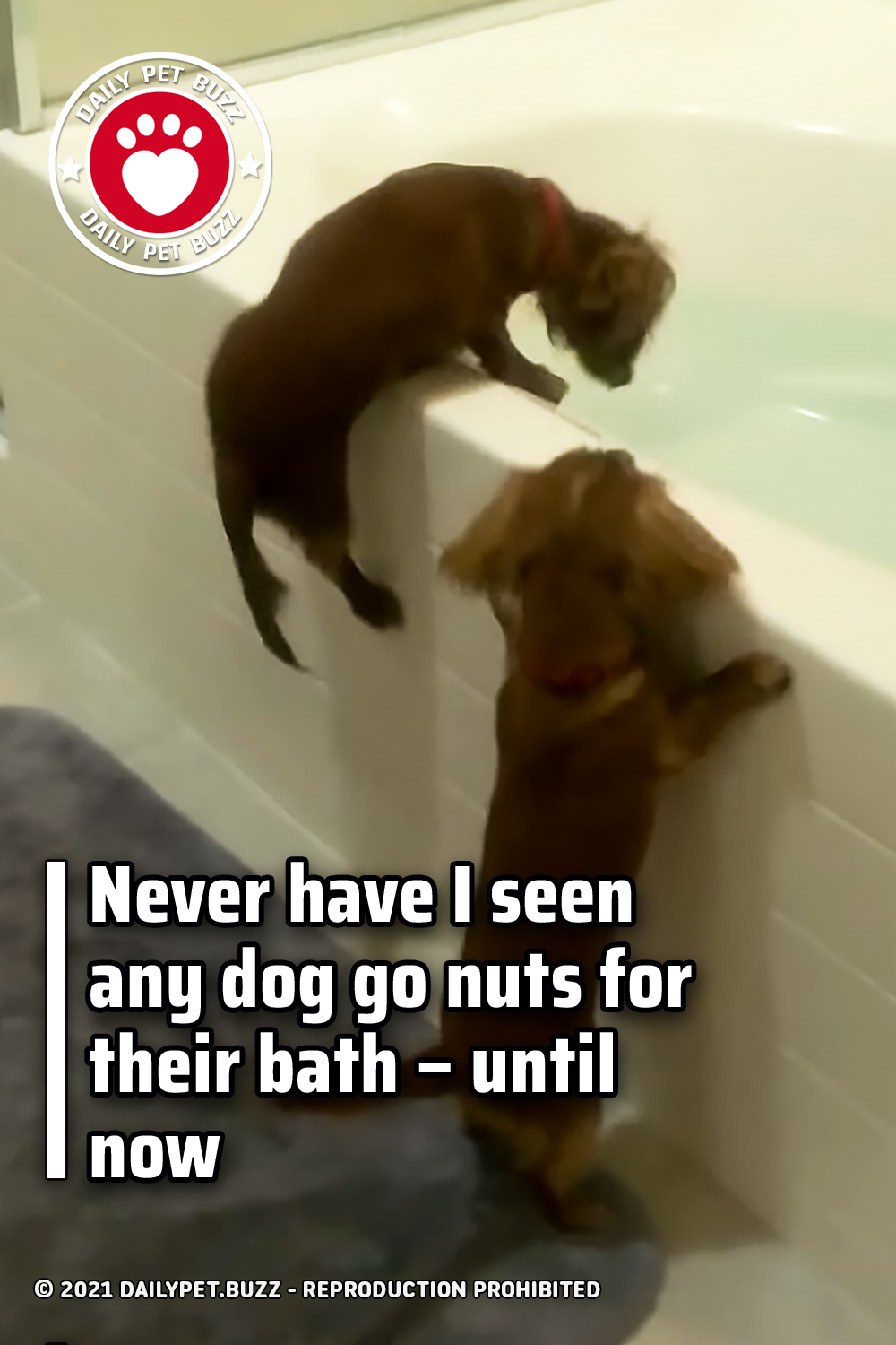 Never have I seen any dog go nuts for their bath – until now