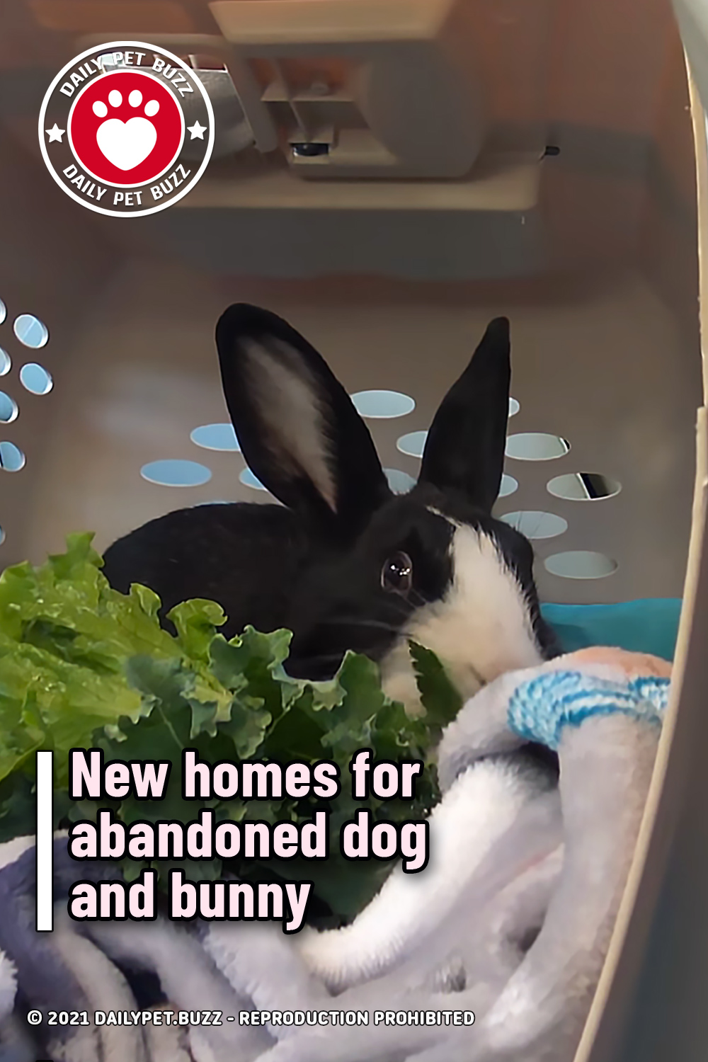 New homes for abandoned dog and bunny