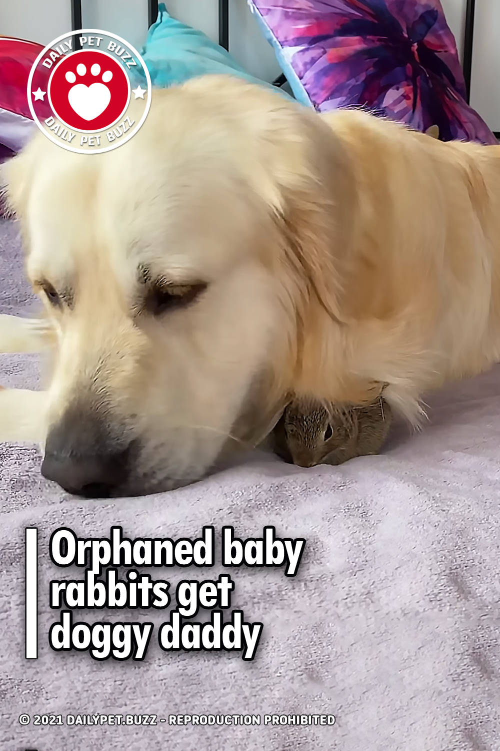 Orphaned baby rabbits get doggy daddy