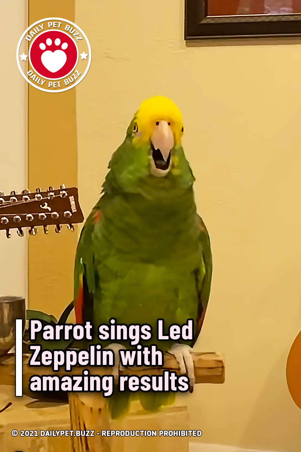 Parrot sings Led Zeppelin with amazing results