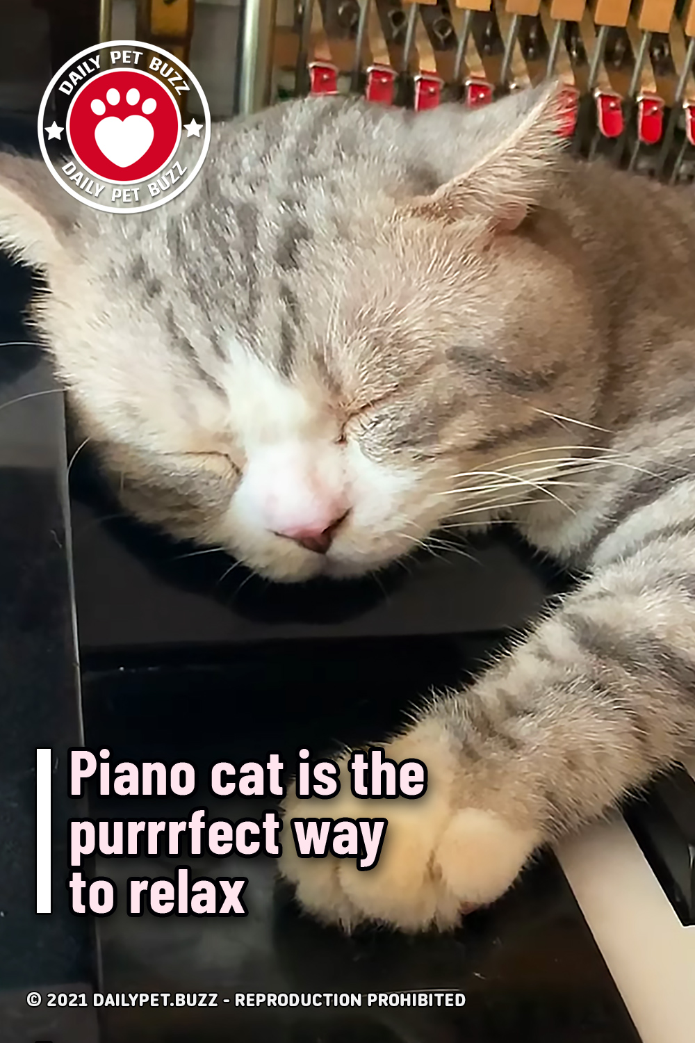 Piano cat is the purrrfect way to relax