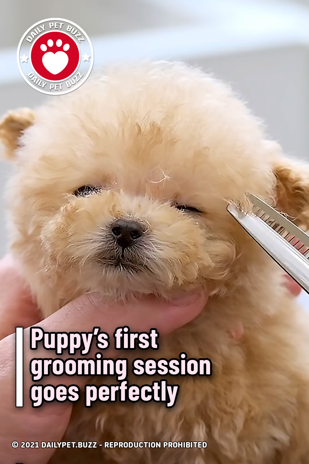 Puppy's first grooming session goes perfectly