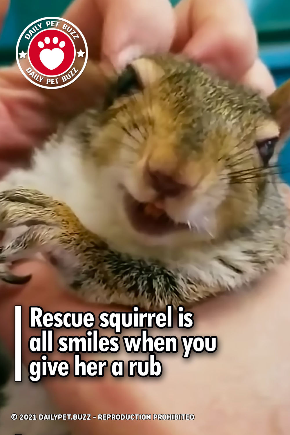Rescue squirrel is all smiles when you give her a rub