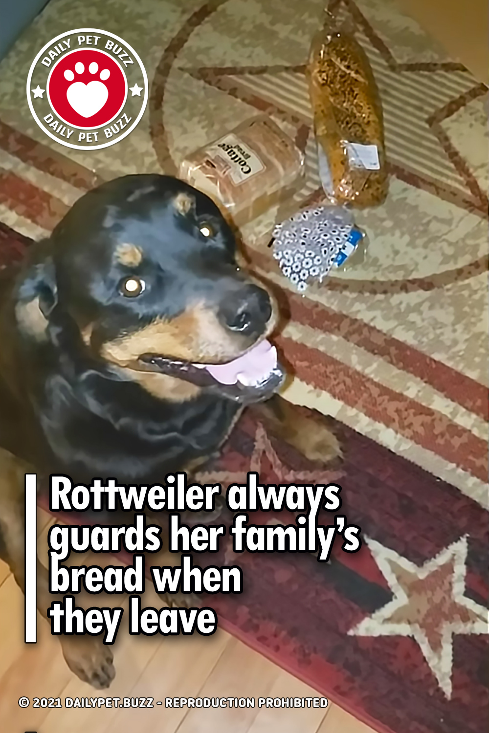 Rottweiler always guards her family's bread when they leave