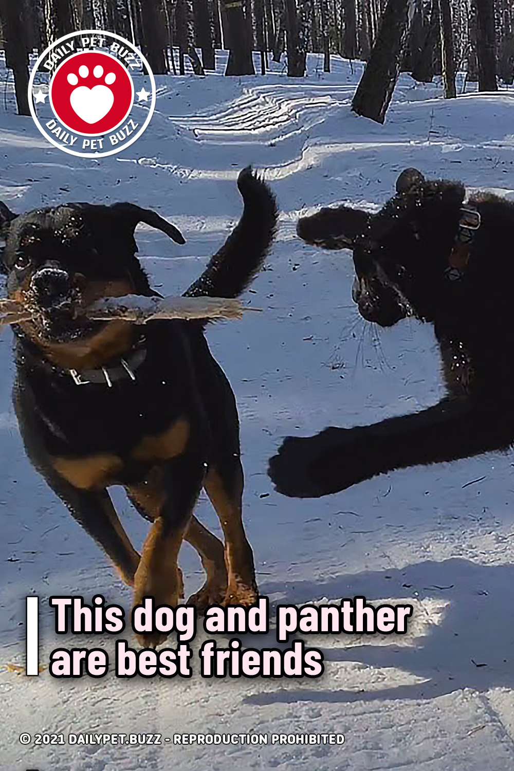 This dog and panther are best friends