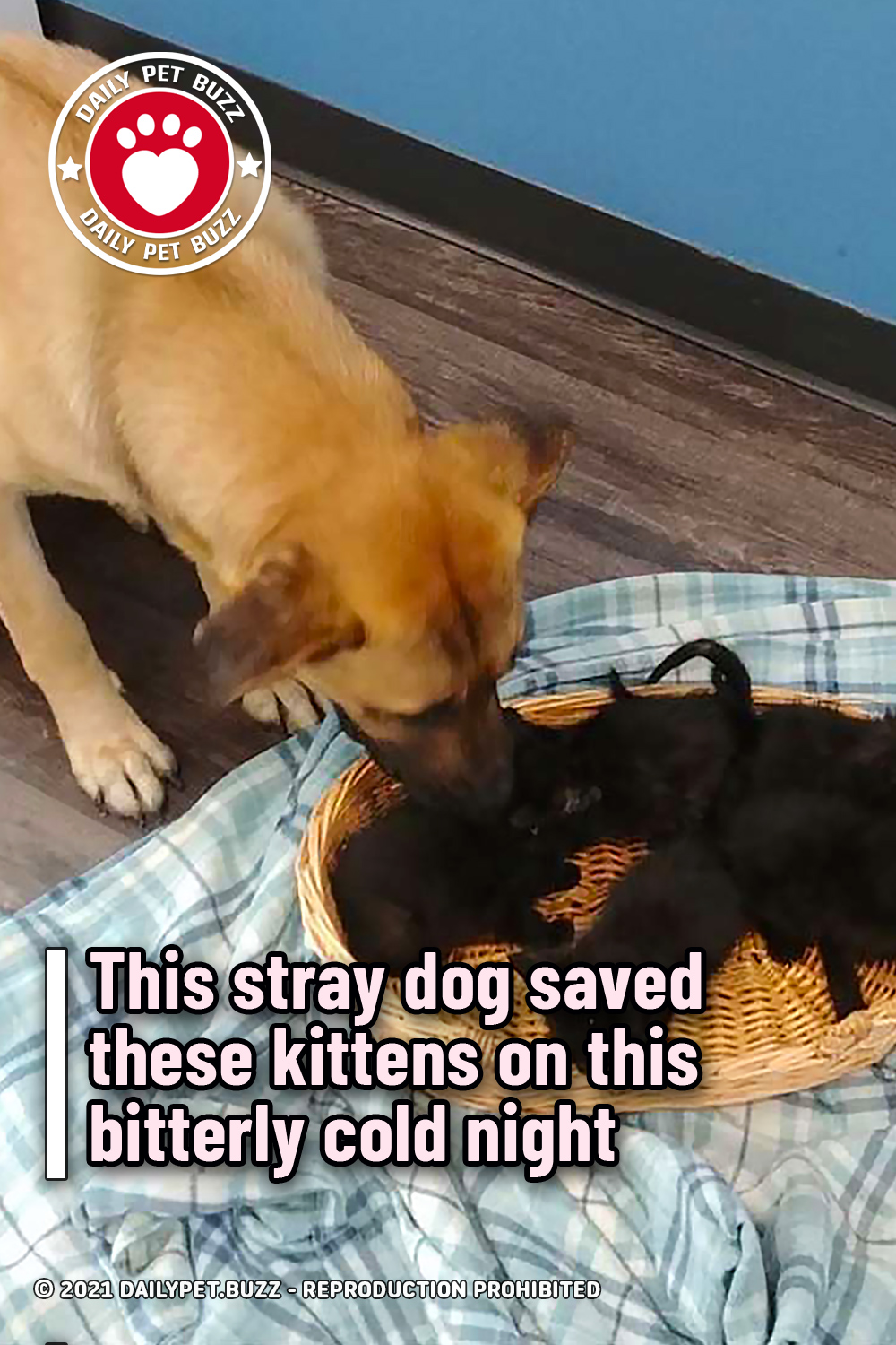 This stray dog saved these kittens on this bitterly cold night