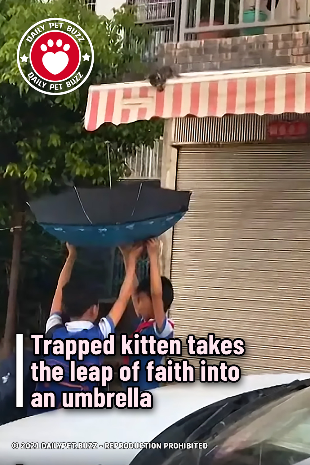 Trapped kitten takes the leap of faith into an umbrella
