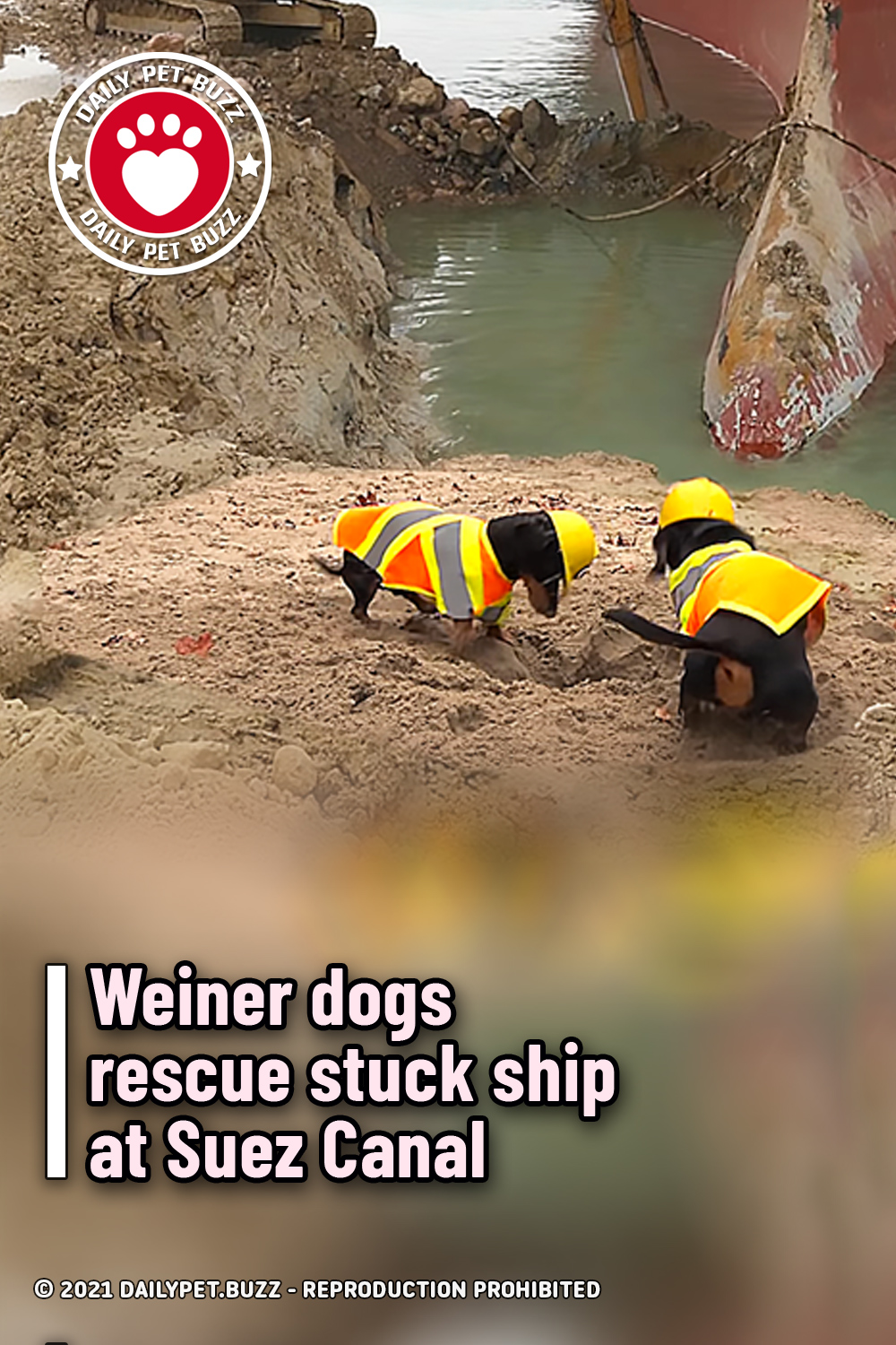 Weiner dogs rescue stuck ship at Suez Canal