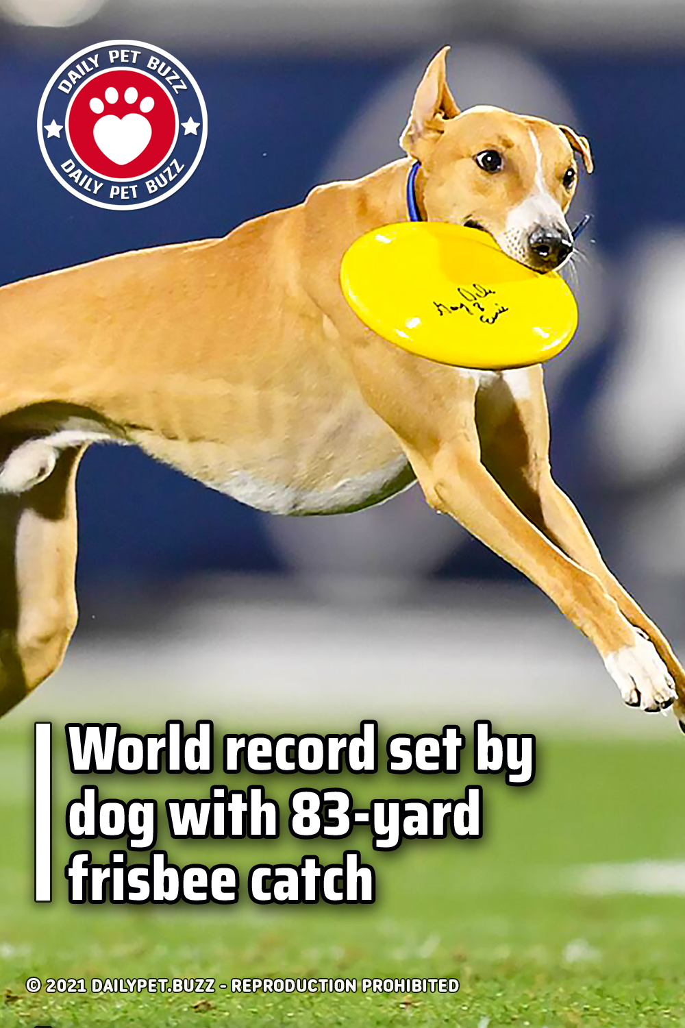 World record set by dog with 83-yard frisbee catch