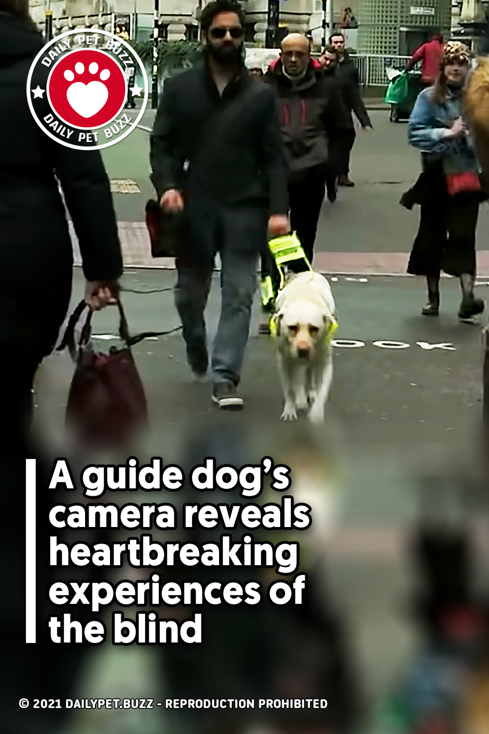 A guide dog's camera reveals heartbreaking experiences of the blind