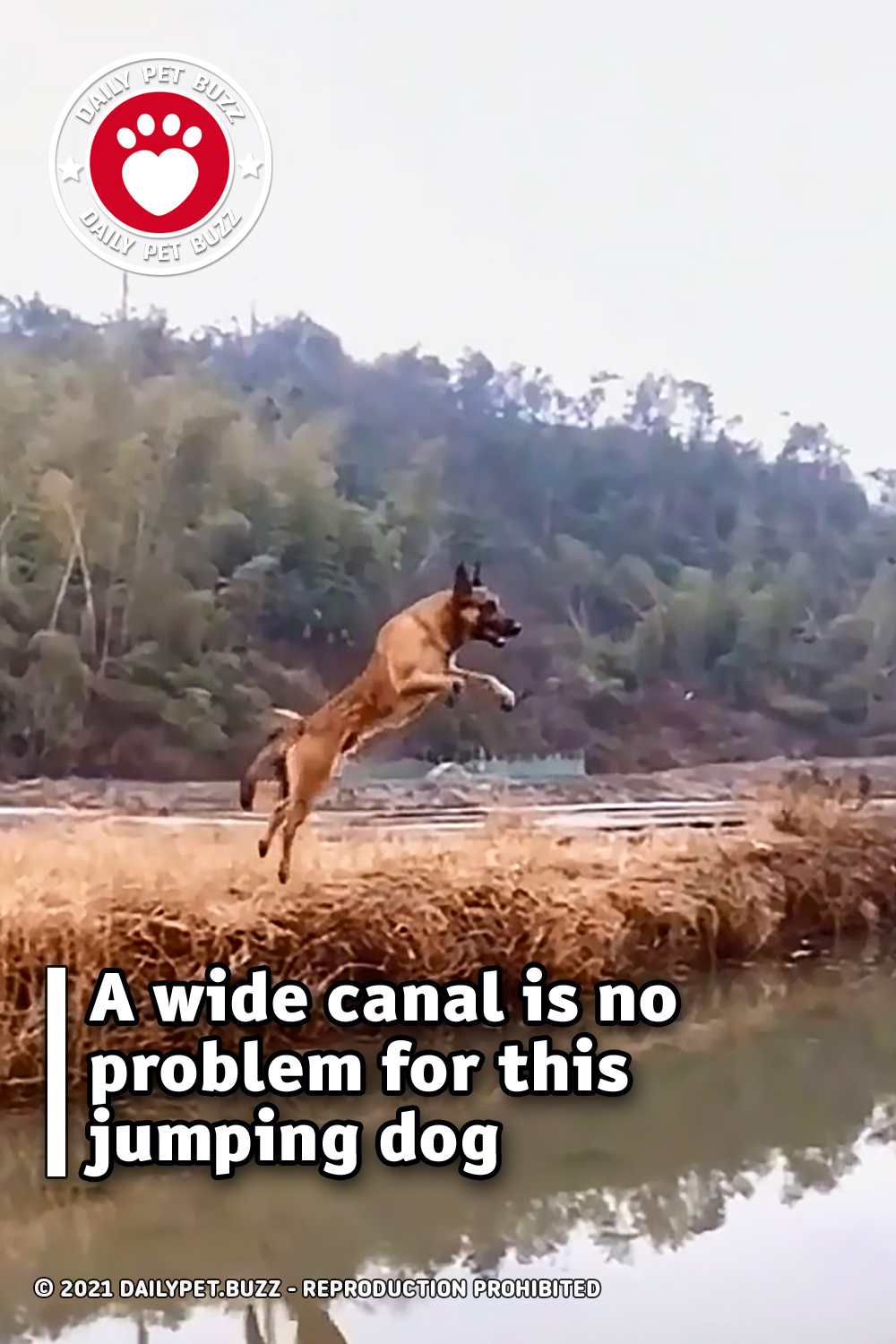 A wide canal is no problem for this jumping dog