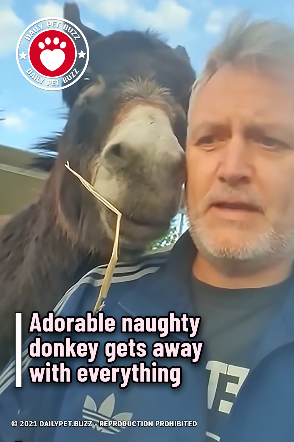 Adorable naughty donkey gets away with everything
