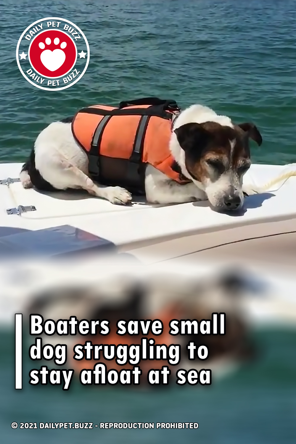 Boaters save small dog struggling to stay afloat at sea